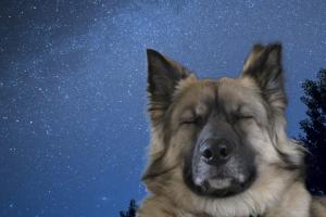 目をつぶってじっとしている犬